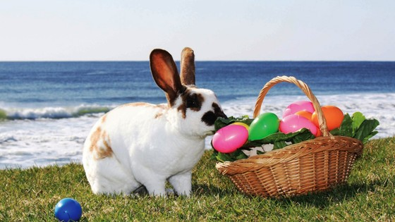 Easter time in Vale do Lobo