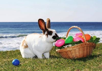 Easter time in Vale do Lobo