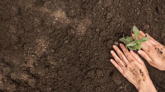 Jardinagem Sustentável